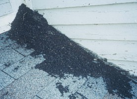 bat guano on roof