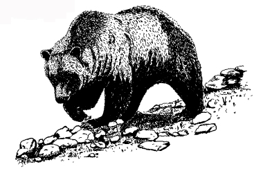 Image:Fig1grizzly.jpg