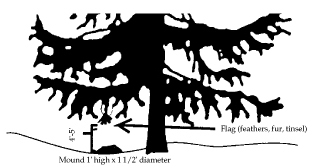 Figure 4. Flag set made with a buried steel leghold trap in a mound.