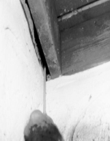 Rodent Entry Points – Wildlife Damage Management