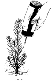 Figure 9. Application of powdered repellent to conifer seedling.