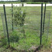 Fencing to prevent deer from browsing a plant